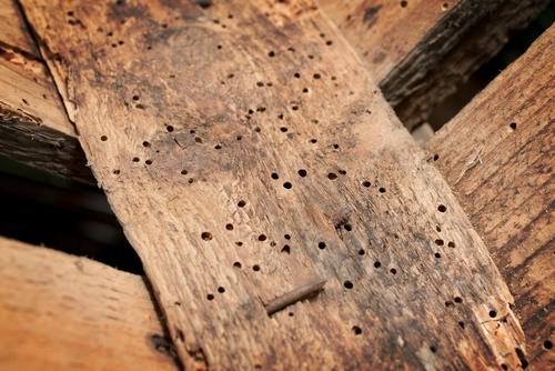 Houtworm bestrijden -schade door houtworm