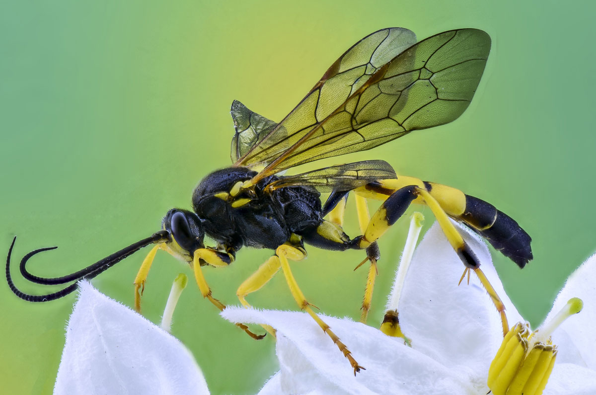 insect-macro-photography-nature-158325